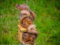 The Three Squirrels